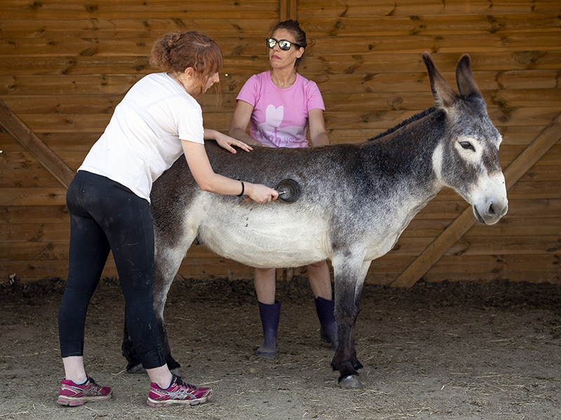 voluntarias rescate animales