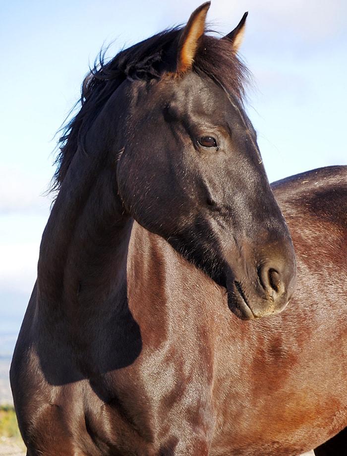 El caballo Manu espera para ser apadrinada en Santuario Vegan
