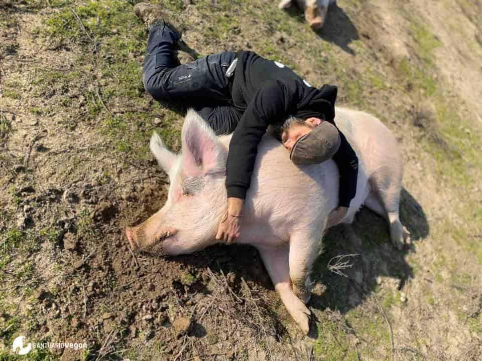 Apadrina cerdo Barbosa