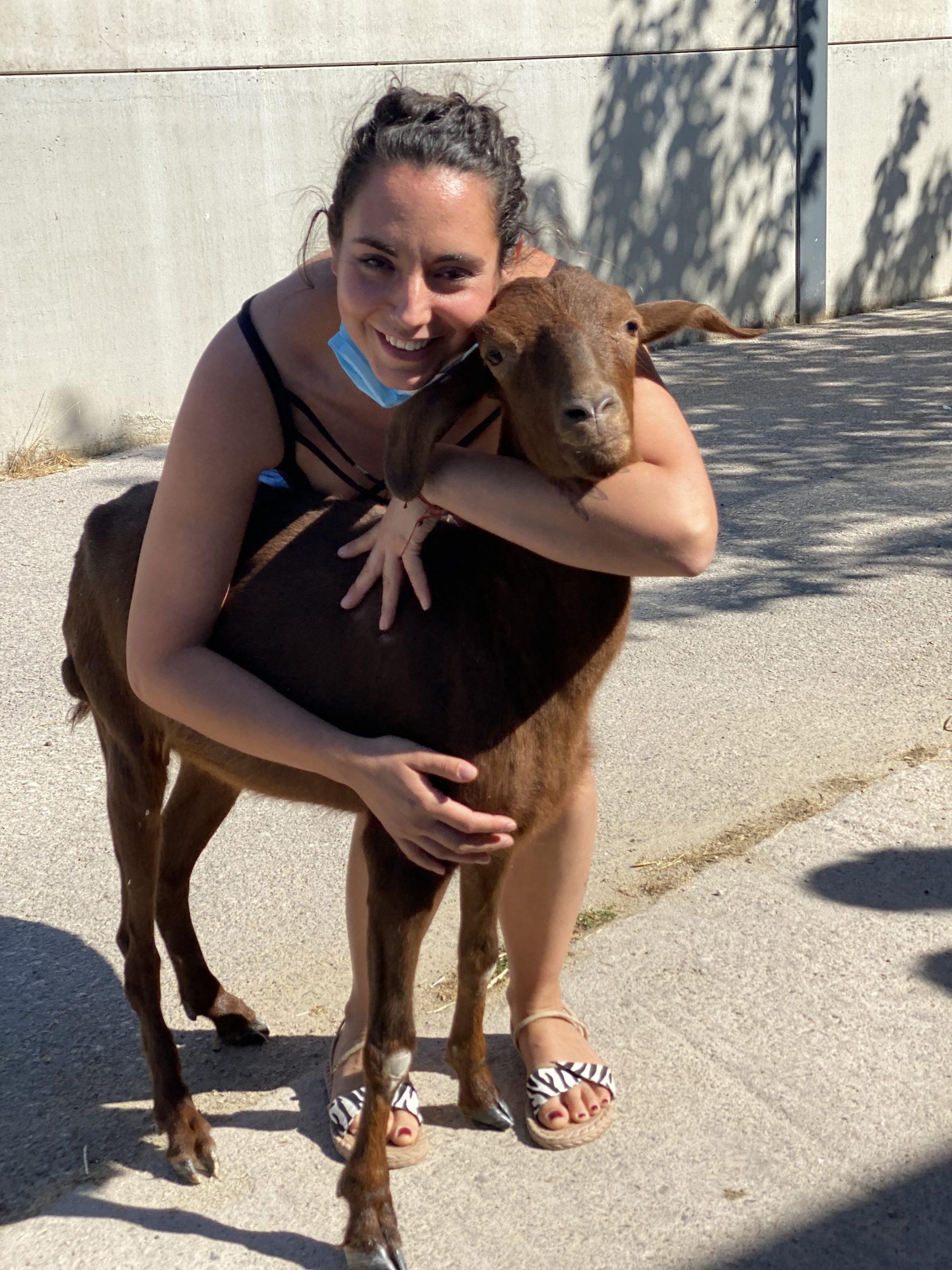 Bonita, una cabra que se recuperó de una parálisis en la facultad de veterinaria de la UEX es adoptada por santuario vegan