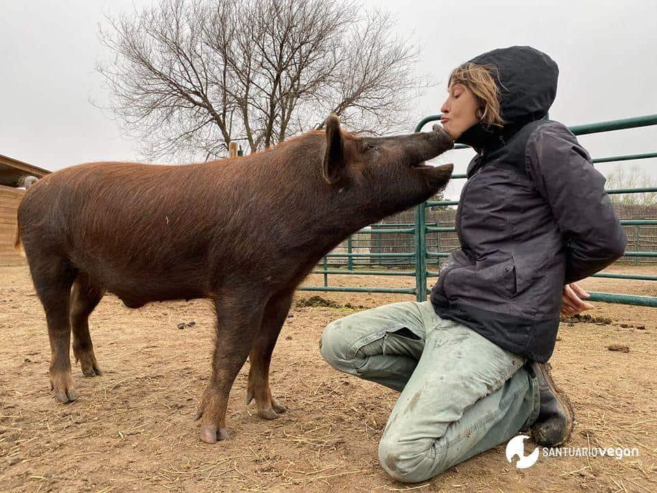 Apadrina cerdo Pancho